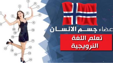 تعلم اللغة النرويجية - اعضاء جسم الأنسان بالصوت